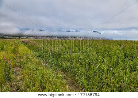 Flora Of Kamchatka. Forests And Fields. Nature Of Kamchatka. Landscapes And Magnificent Views Of The