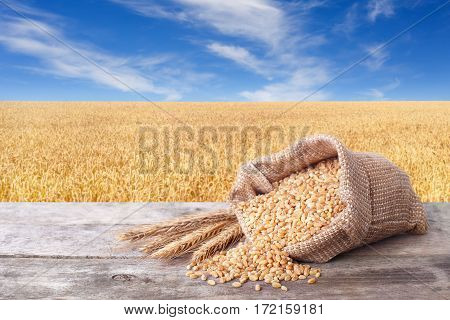 Bulgur scattered out of the bag on table with field of wheat on the background. Agriculture and harvest concept. Gold wheat field and blue sky