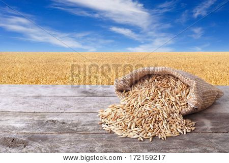 Grains of oat on wooden table with field on the background. Ripe field, blue sky with beautiful clouds. Uncooked porridge. Grain oats with husk in burlap bag. Cereal grains