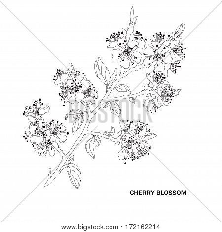 Decorative Cherry Blossom