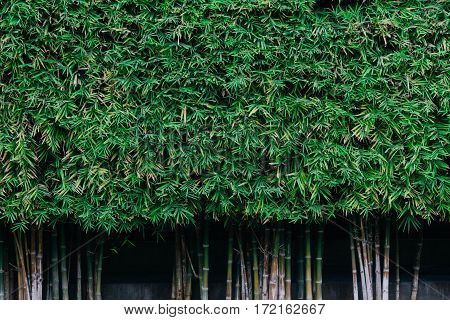 Green fresh bamboo leaf background nature texture