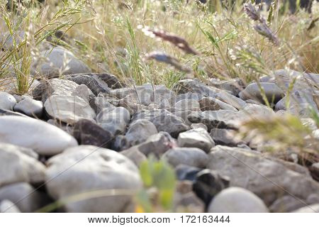 Green vegetation pushing its way growing through the rocks from side background