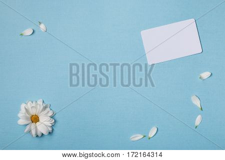 Spring top view composition: business / credit / visiting card mockup scattered petals around white flower with yellow heart. Sky blue background with copy space for text. Flat lay.