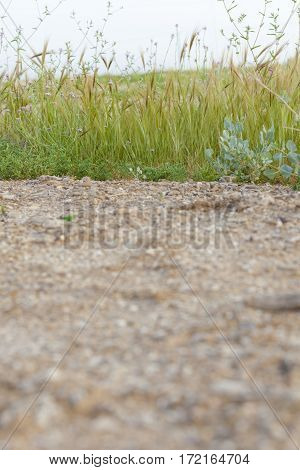 Dirt gravel road and wayside with vegetation green line low angle