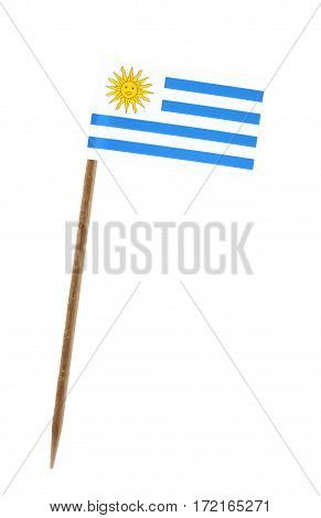 Tooth pick wit a small paper flag of Uruguay