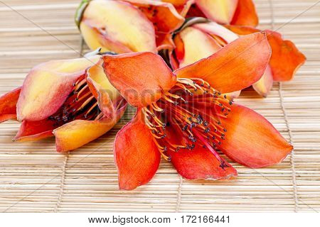 Flower Of Fresh Bombax Ceiba Linn - Prepare For Drying Androecium For Food