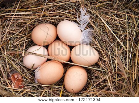 some chicken eggs lying in the hay.