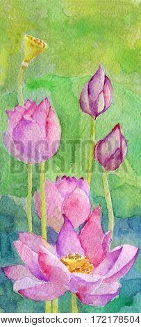 watercolor sketch of lotus flower. Nature. Spring