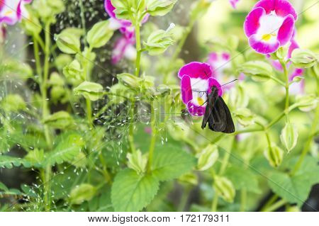 Butterfly On A Flower. Field With Crimson Flowers. Overgrown Grass