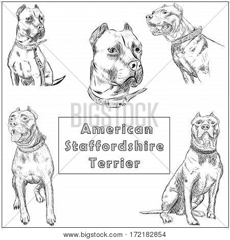Set of freehand sketch illustration of American Pit Bull Terrier, American Staffordshire Terrier, and Staffordshire Bull Terrier dog , doodle hand drawn