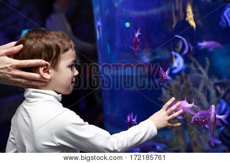 Child Looking At Fishes