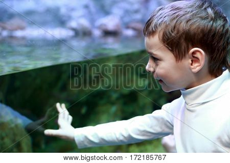Child Looking At Aquarium