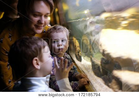 Mother and her sons looking at aquarium at amusement center