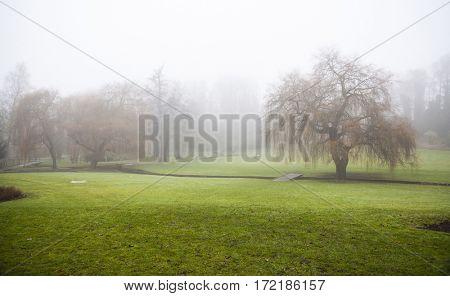 Sunshine through dense fog on a golf course
