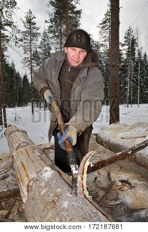 Leningrad Region Russia - February 2 2010: The process of peeling and debarking of wood Man peel logs using a debarking spade.