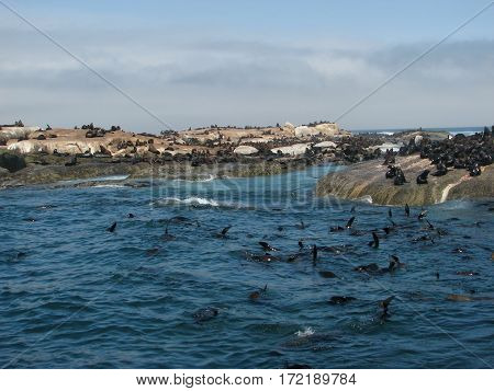 SEAL ISLAND, CAPE TOWN SOUTH AFRICA 12kiog