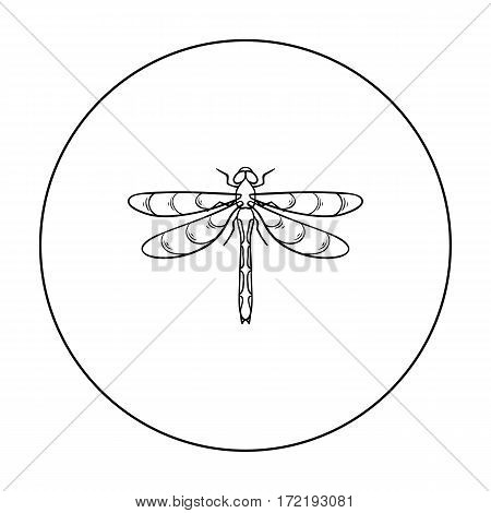 Dragonfly icon in outline design isolated on white background. Insects symbol stock vector illustration.