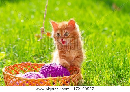 Little Red Playful Kitten With A Wool Of Thread On The Green Grass