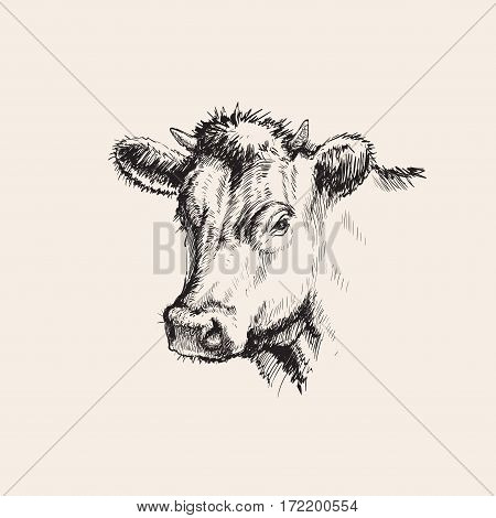 Hand Drawn Sketch Cow Vector illustration Hand Drawn Sketch Cow Vector illustration