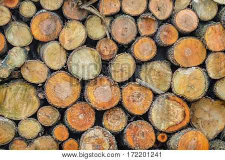logs stacked in piles. background texture of wood