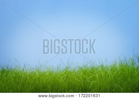 Stems young green grass on a blue background