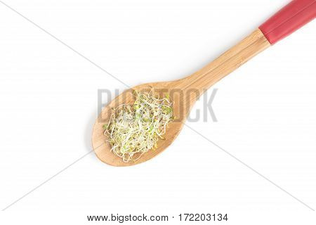 Alfalfa Sprouts Into A Spoon