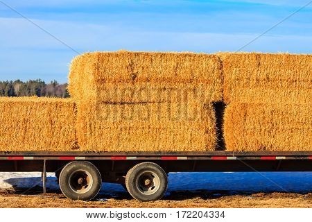 Stacked straw bales on a semi-trailer with a blue sky background.