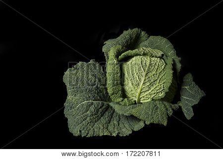 Whole savoy cabbage isolated on black background