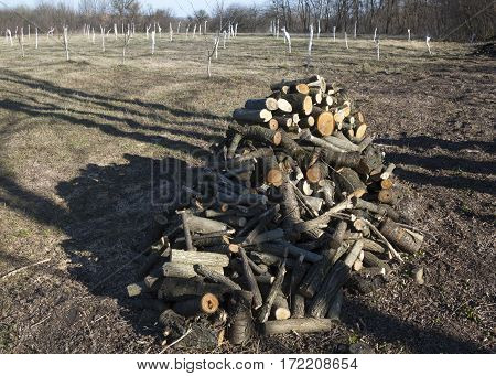 Pile of cut logs in the garden. Young planted saplings wrapped for warming in the background. Close up.