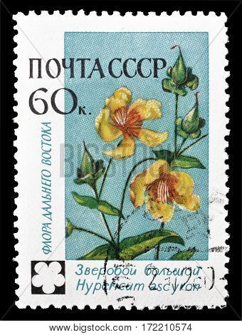 SOVIET UNION - CIRCA 1960 : Cancelled postage stamp printed by Soviet Union, that shows Hypericum ascylon flower.