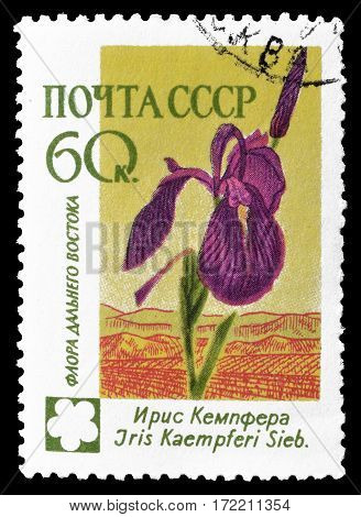 SOVIET UNION - CIRCA 1960 : Cancelled postage stamp printed by Soviet Union, that shows Iris flower.
