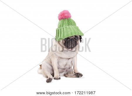 cute pug puppy dog sitting and looking shy wearing green knitted hat with pink pompom isolated on white background
