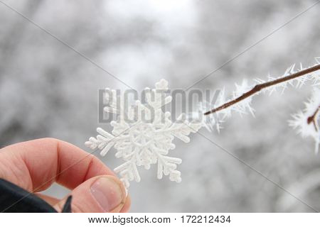 hand holds a beautiful snowflake on the background of the winter forest, snow, christmas idea