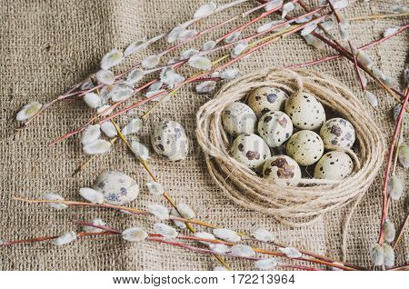 Quail Eggs And Pussy-willow On Canvas Background