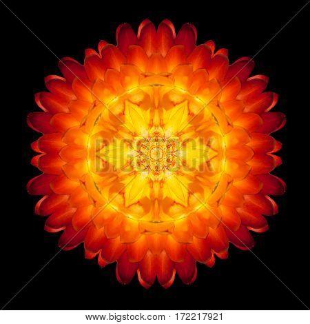 Red Flower Mandala Kaleidoscope Isolated On Black