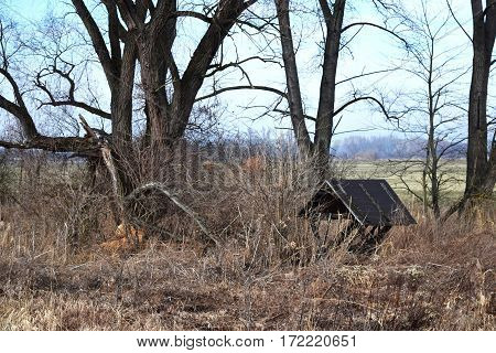 animal feeding in winter . feeding place made of wood for animals