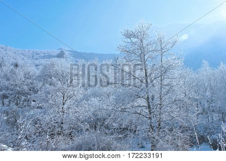 Winter landscape with trees, snow and blue sky