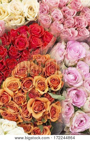 Bouquets of the colorful roses as background