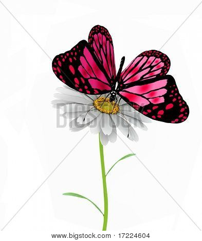 butterfly and daisy on white background poster