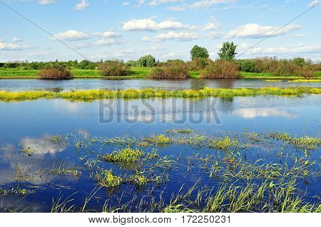 Spring landscape - spring river overgrown with yellow spring flowers in sunny spring day. Spring landscape in sunny weather. Blue river with yellow flowers - spring landscape