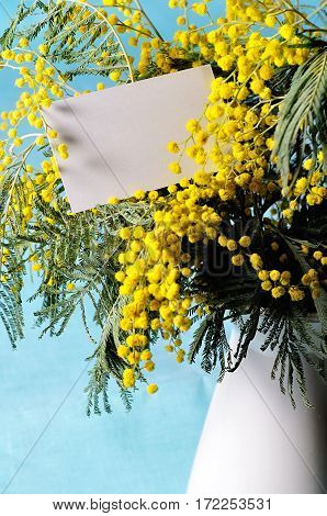 Mimosa spring flowers and white card - spring background for spring holiday celebration. Spring still life with spring mimosa flowers bunch