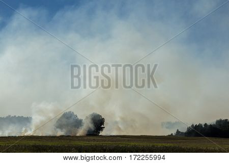 Fire On The Field, Burning Grass, White Smoke On A Sunny Day