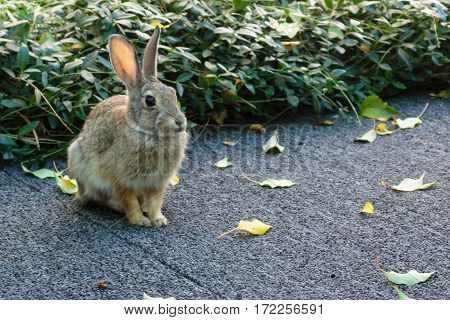 A little bunny rabbit sitting poised ears perked at the ready to defend itself.
