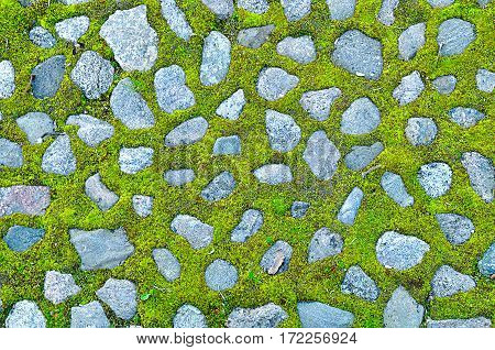 Stone background - grey stones and bright green grass between them. Closeup of green lawn grass - stone walkway with green grass and grey stones, natural stone background with green grass