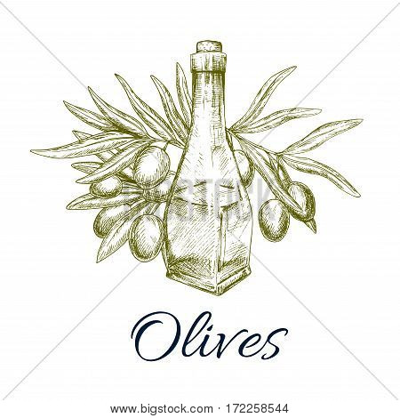 Green olive tree branch and olive oil bottle vector sketch. Design of fresh olives fruits bunch for vegetarian food salad flavoring ingredient or vegetable seasoning product package