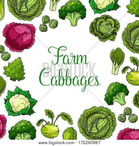 Cabbages vector vegetables with white and red cabbage, romanesco, kohlrabi and brussels sprouts, cauliflower, chinese cabbage and pak choi and scotch kale. Vegetarian or vegan leafy veggies