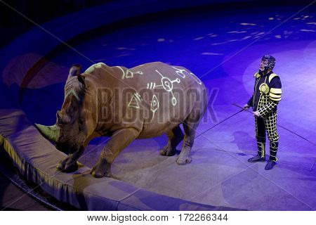 ST. PETERSBURG, RUSSIA - FEBRUARY 3, 2017: Trained rhino in the dress rehearsal of the circus program CircUS 2.0. The program reflects the vision of circus art of XXI century