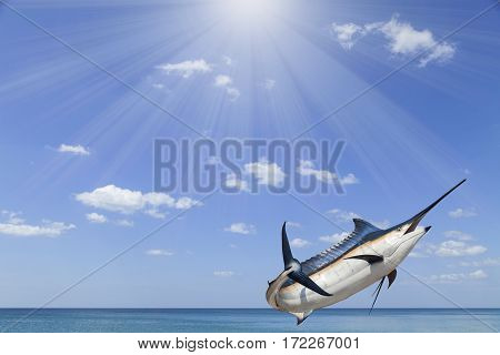 Marlin - SwordfishSailfish saltwater fish (Istiophorus)with sun light sea and sky background