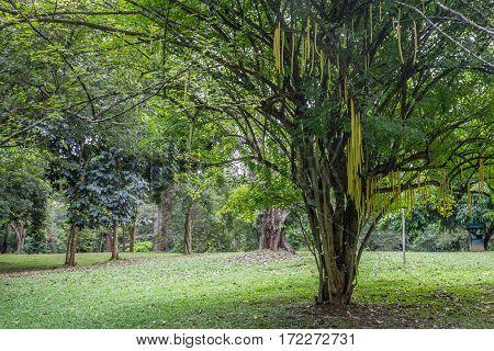 Royal Gardens of Peradenia near Kandy, Sri Lanka