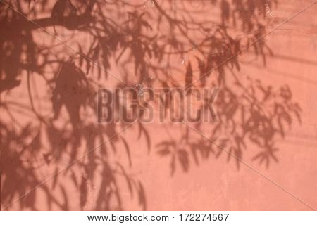 Shadow Of Leaves On Faded Red Wall